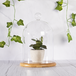 Glass Cloche Bell Jar | M&W Large - Image 5