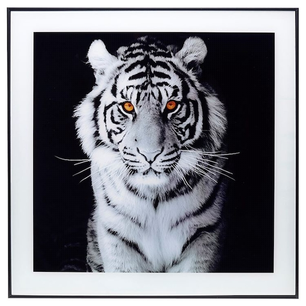 Decor Picture Square Large Tiger Amber