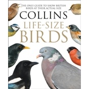 Collins Life-Size Birds : The Only Guide to Show British Birds at Their Actual Size