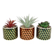 Set of 3 Succulents In Ceramic Pots With A Cubic Design