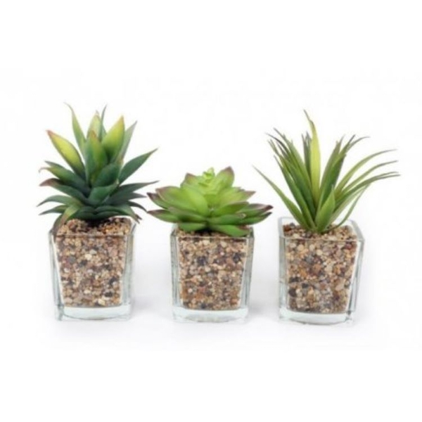 Assorted Glass Succulent Pots (One Random Supplied)