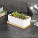 Bamboo Base for Ceramic Planters - Set of 6 | M&W - Image 4