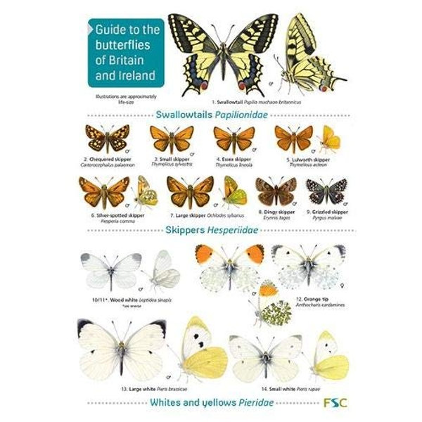 Guide to the butterflies of Britain and Ireland  Paperback / softback 2019