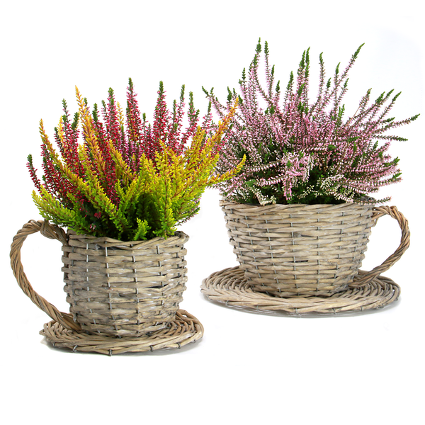 Set of 2 Teacup Planters
