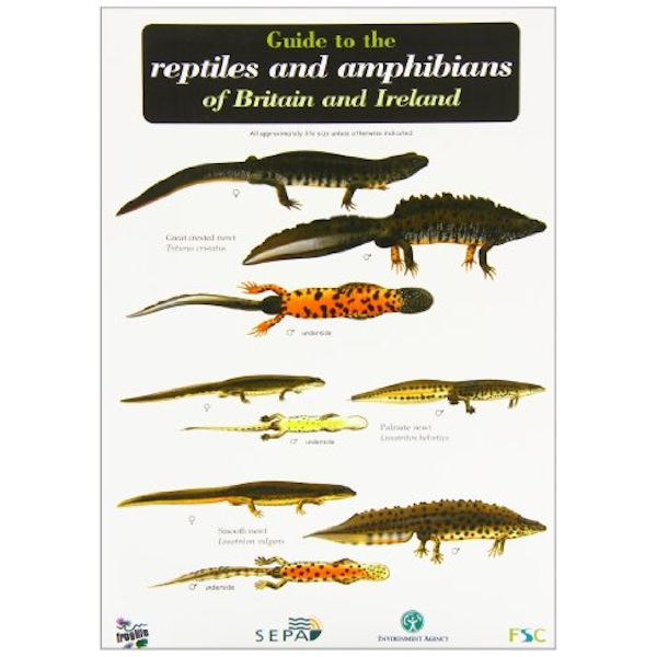 Guide to the Reptiles and Amphibians of Britain and Ireland  1999 Sheet map, folded