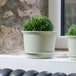 Plastic Plant Pots - Set of 10 | Pukkr Large - Image 2