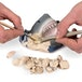 National Geographic Shark Teeth Dig Kit - Image 4