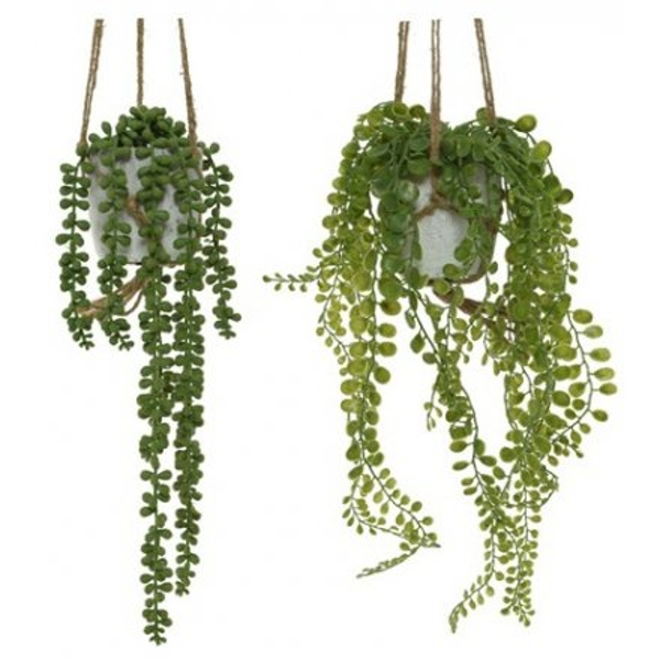 Hanging Potted Plant (1 Random Supplied)