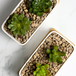 Ceramic Planter & Bamboo Base | M&W x2 Rectangular  - Image 4