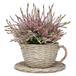 Set of 2 Willow Teacup Planters | M&W - Image 3