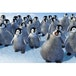 Happy Feet 2006 DVD - Image 2