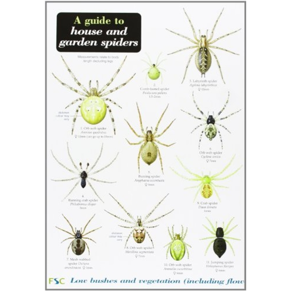 A Guide to House and Garden Spiders Chalk and Limestone 2002 Pamphlet