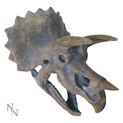 Triceratops Head Large