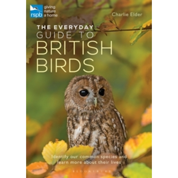 The Everyday Guide to British Birds : Identify our common species and learn more about their lives