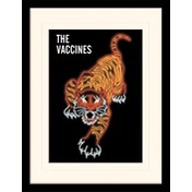 The Vaccines - Tiger Mounted & Framed 30 x 40cm Print