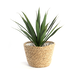 Seagrass Planters - Set of 3   M&W - Image 6