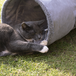 Suede Cat Tunnel | Pukkr - Image 4