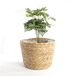 Seagrass Planters - Set of 3   M&W - Image 3