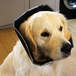 Padded Comfort Pet Recovery Cone Collar | M&W - Image 2