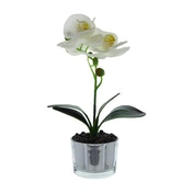 The Flower Patch White Orchid in Glass Pot 26cm