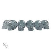 Quartz (Pack Of 6) Skulls