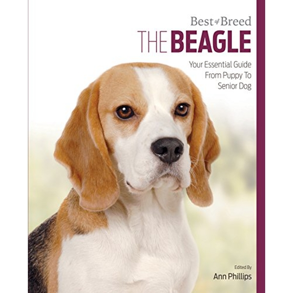 Beagle: Best of Breed by Ann Phillips (Paperback, 2016)