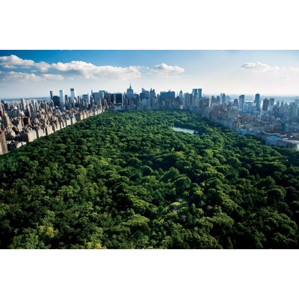 Central Park New York Maxi Poster
