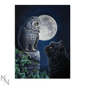 3D Picture Purrfect Wisdom 28.5 x 38.5cm (LP)