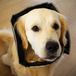 Padded Comfort Pet Recovery Cone Collar | M&W - Image 5