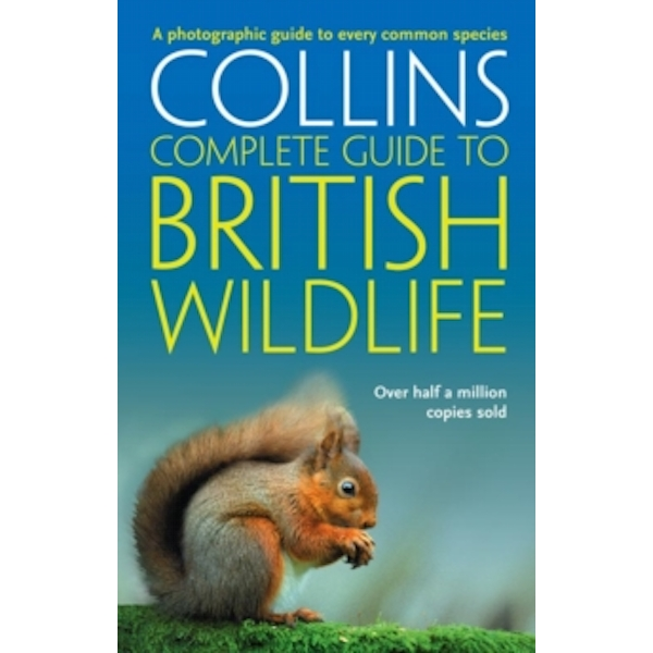 British Wildlife : A Photographic Guide to Every Common Species