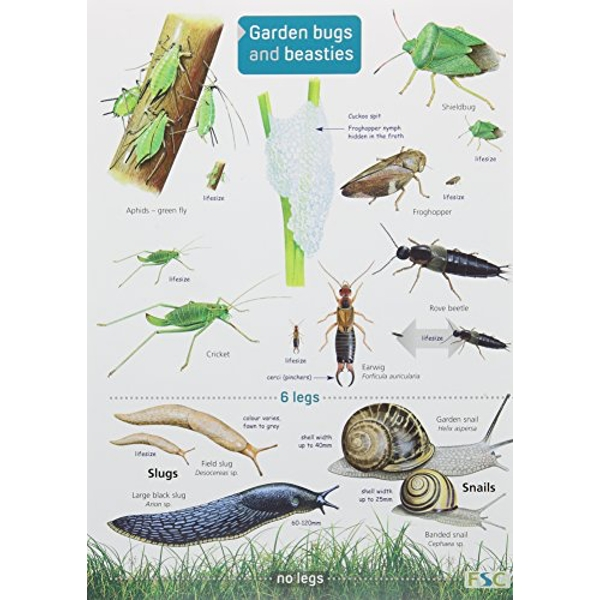 Garden Bugs and Beasties  Fold-out book or chart 2014