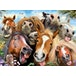 Selfies Horsing Around Jigsaw Puzzle - 500 Pieces - Image 2