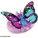 Little Live Pets -  Lil Butterfly (1 At Random) - Image 5