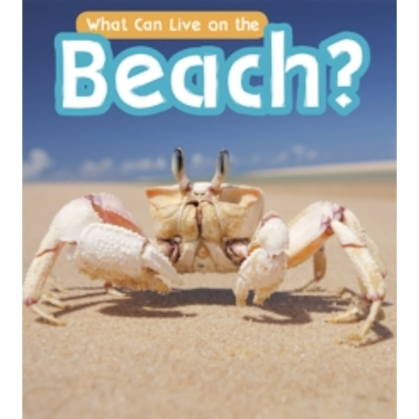 What Can Live at the Beach?