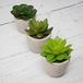 Set of 6 Artificial Fake Succulent Plants | M&W - Image 3