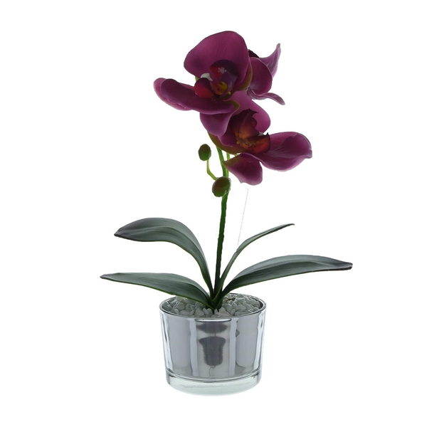 The Flower Patch Purple Orchid in Glass Pot 26cm