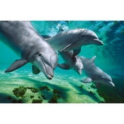 Dolphins Underwater Maxi Poster