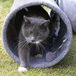 Suede Cat Tunnel | Pukkr - Image 7