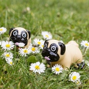Thumbs Up! Wind Up Pug