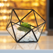 Half Ball Glass Terrarium | M&W IHB USA (NEW) - Image 4