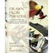 Drawn From Paradise : The Discovery, Art and Natural History of the Birds of Paradise - Image 2