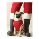 Pug Elf Holiday Half Notecard