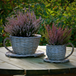 Set of 2 Willow Teacup Planters | M&W - Image 2