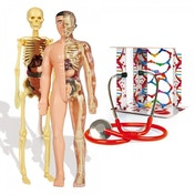 Science & Play The Human Body