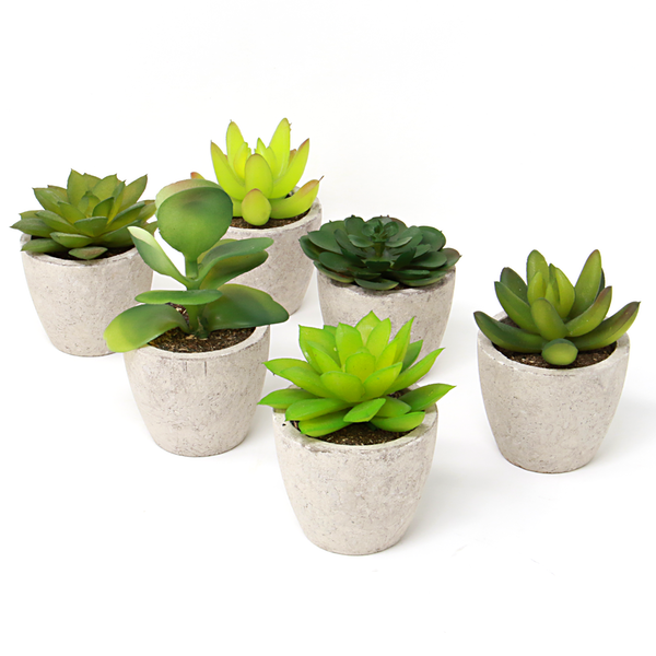 Set of 6 Artificial Faux Succulent Plants | M&W
