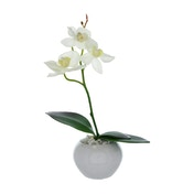 The Flower Patch Orchid White in Ceramic Pot 26cm