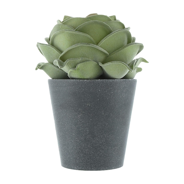 The Flower Patch Rose Green in Grey Pot 19.5cm