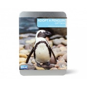 Adopt A Penguin Gift Box