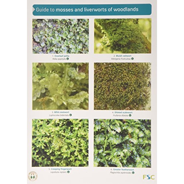 Guide to Mosses and Liverworts of Woodlands by Martin Godfrey (Fold-out book or chart, 2014)