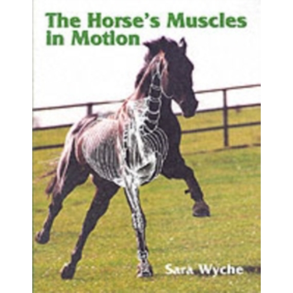 The Horse's Muscles in Motion by Sara Wyche (Hardback, 2001)